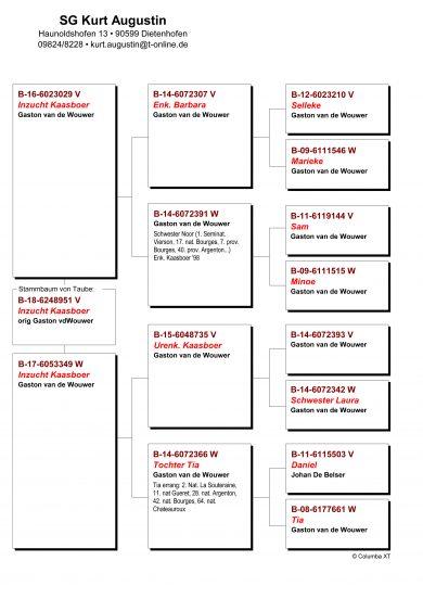B.18-6248951 orig. Gaston van de Wouwer vol